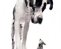 Voedingstips voor je hond (Groot en klein)
