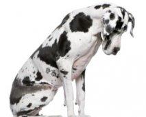 Hond hoofd buigen