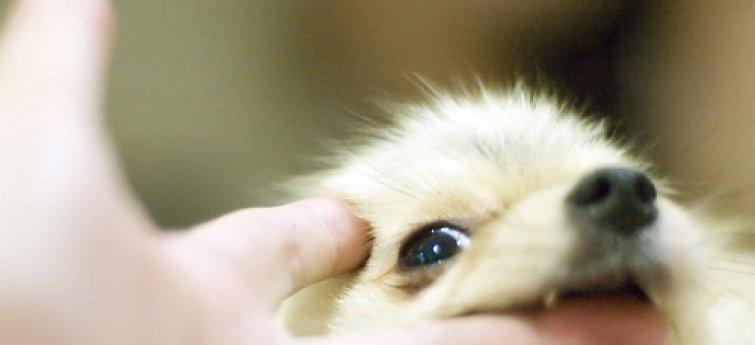 Waarom je puppy bijt en vijf manieren om hem dit af te leren