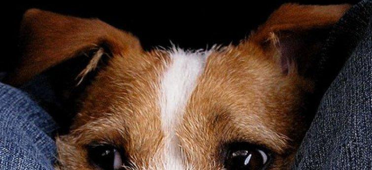 Waarom jij nog niet klaar bent om een hond aan te schaffen