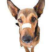 Wat als je hond bloedt?