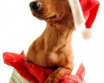 Wat betekent kerstmis voor honden?