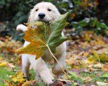 spelende puppy