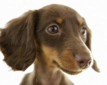Wat is het ideale hondenras voor mij?