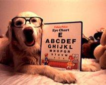 Wat mag je van een hondenschool verwachten?