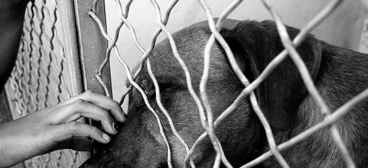 Wat moet ik weten voor ik een hond adopteer?