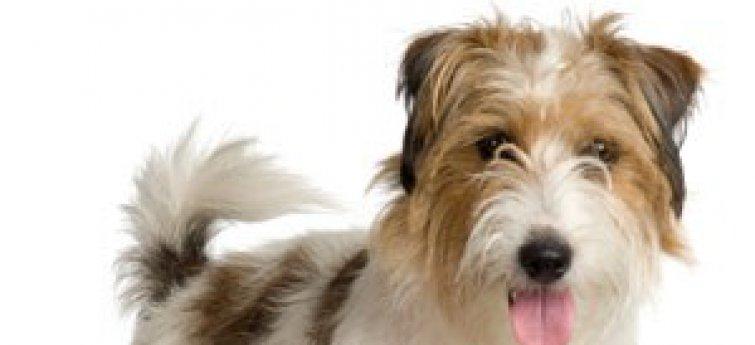 Wat moet je weten vooraleer je een hond koopt?