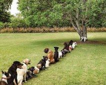Wat te doen wanneer je hond veel gaat urineren?