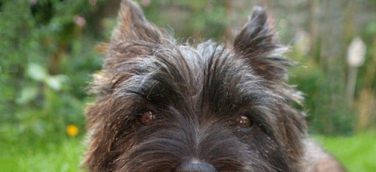 Wat verwachten we van onze hond?