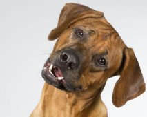 emoties en gevoelens hond