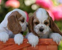 Welke puppy past bij mij?