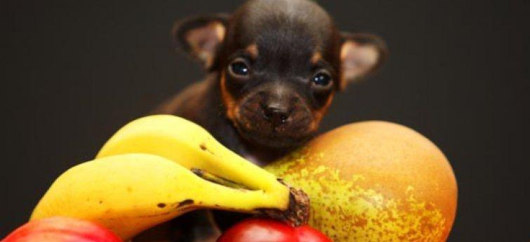Welk eten geef je aan je hond? Niet alles is gezond!