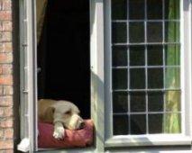 Adoptie: Welke vragen moet je stellen als je een hond adopteert uit een asiel?