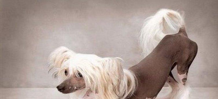 Welk hondenras past bij mij?