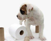wc papier puppy