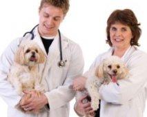 Ziekteverzekering voor honden