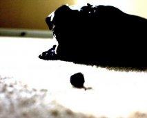 Zijn blauwe bessen veilig voor honden?