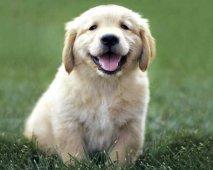 Zorgen voor een puppy