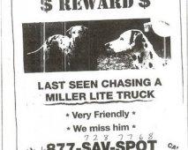 Zo voorkom je dat je hond verdwijnt