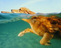 Zwemmen met je hond