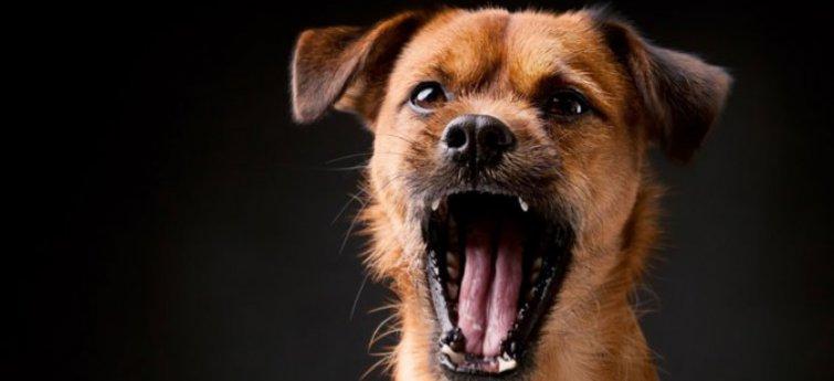 Hoe stop je het 's nachts blaffen van je hond