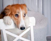 hoe honden treuren