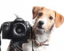 camera hond