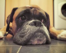 Tekenen dat je hond zich verveelt – en hoe het te verhelpen
