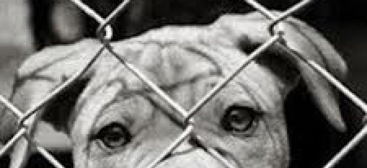Hond voor hek