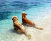 Honden zee