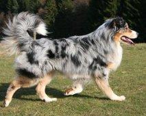 Hond met staart