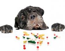 Hond met pillen