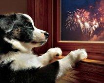 Help, mijn hond heeft angst voor vuurwerk