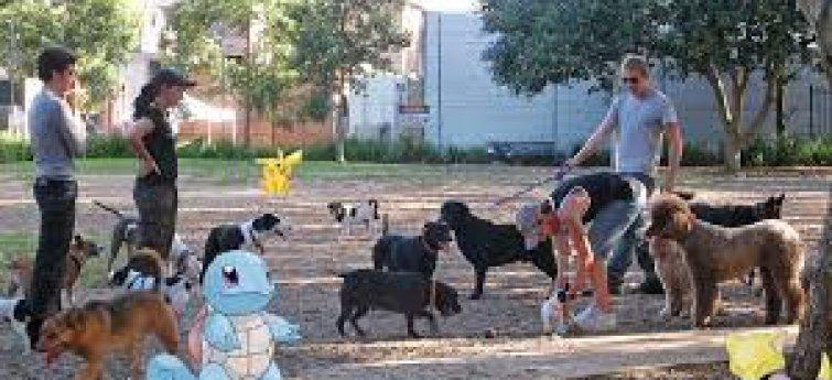 Pokemon honden