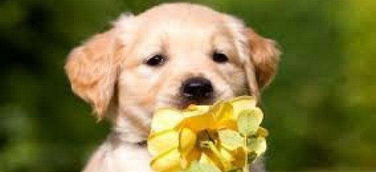 Puppy met bloemen
