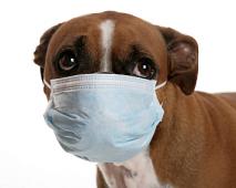 Welke ziektes kunnen honden verspreiden?